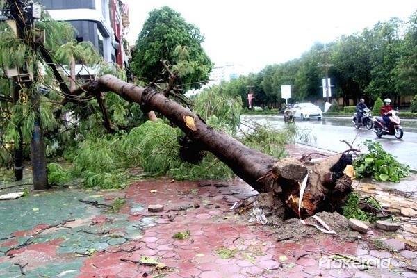 ベトナム、熱帯暴風雨上陸により4人死亡か,ベトナム,天気,災害