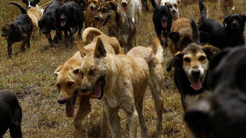 犬の群れに襲われ7歳児死亡,ベトナム,犬,死亡